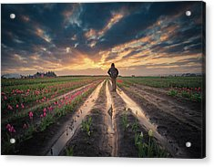 Acrylic Print featuring the photograph Man Watching Sunrise In Tulip Field by William Lee
