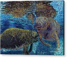 Manatee Motherhood Acrylic Print by David Joyner