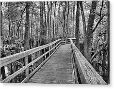 Manatee Springs Black And White Boardwalk Acrylic Print by Adam Jewell