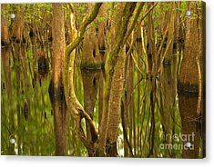 Manatee Springs Cypress Reflections Acrylic Print by Adam Jewell