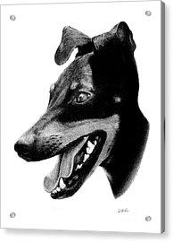 Manchester Terrier Acrylic Print