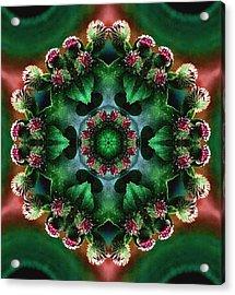 Mandala Bull Thistle Acrylic Print