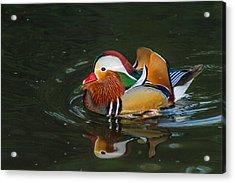 Mandarin 2 Acrylic Print