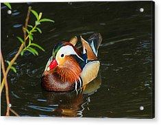 Mandarin 3 Acrylic Print