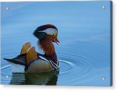 Majestic Mandarin Duck Acrylic Print
