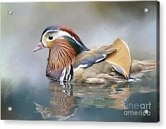 Acrylic Print featuring the photograph Mandarin Duck Swimming by Eva Lechner