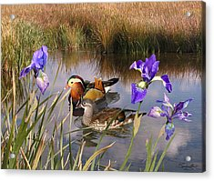 Mandarin Ducks And Wild Iris Acrylic Print