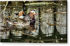 Mandarin Ducks The Couple Acrylic Print by Torbjorn Swenelius