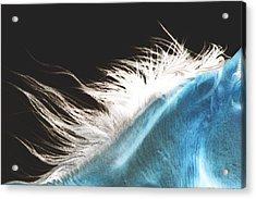 Mane Beauty Acrylic Print by ELA-EquusArt