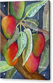 Mango One Acrylic Print by Terry Arroyo Mulrooney