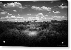 Mangrove Clearing Acrylic Print by Marvin Spates