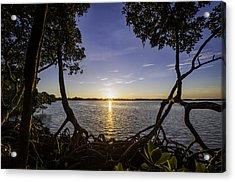 Mangrove Frame Acrylic Print by Nick  Shirghio