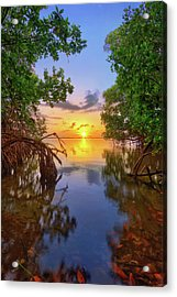 Mangrove Sunset From Jensen Beach Florida Acrylic Print