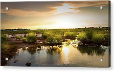 Mangroves Forest  Acrylic Print by Louloua Asgaraly
