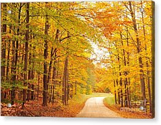 Manisee National Forest In Autumn Acrylic Print by Terri Gostola