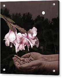 Manna Acrylic Print