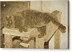 Mannie Is Relaxing Acrylic Print