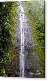 Manoa Falls - Honolulu Hawaii Acrylic Print