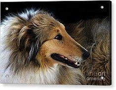 Man's Best Friend Acrylic Print by Bob Christopher