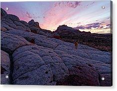 Man's Best Friend Sunset Acrylic Print by Jonathan Davison