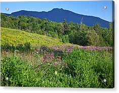 Acrylic Print featuring the photograph Mansfield Meadow by Susan Cole Kelly