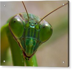 Mantis Face Acrylic Print by Jonny D