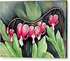 Many Bleeding Hearts Acrylic Print