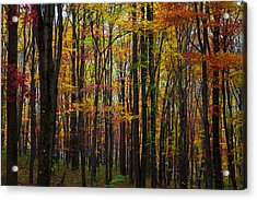 Acrylic Print featuring the photograph Many Colors Of Autumn by April Reppucci
