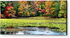 Many Colors Of Autumn Acrylic Print