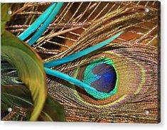 Many Feathers Acrylic Print