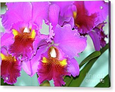 Acrylic Print featuring the photograph Many Purple Orchids by Lehua Pekelo-Stearns
