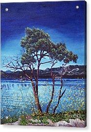 Manzanita At Lake Hemet Acrylic Print by Jiji Lee