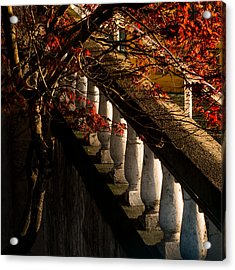 Maple And Concrete Acrylic Print