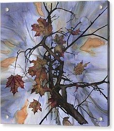 Maple Autumn Splash Acrylic Print by Carolyn Doe