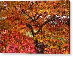 Maple Beauty Acrylic Print