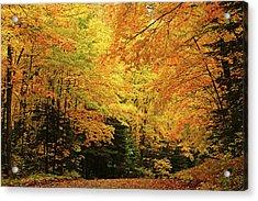Maple Blaze Acrylic Print