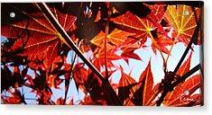 Maple Fire Acrylic Print