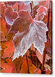 Maple Frost  Acrylic Print