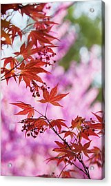 Maple Acrylic Print