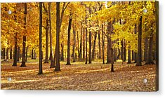Acrylic Print featuring the photograph Maple Glory by Francesa Miller