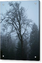 Maple In Fog Acrylic Print by Ken Day