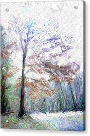 Maple In Light Acrylic Print