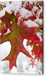 Maple Leaf And Snow 7467 Acrylic Print by Dan Beauvais