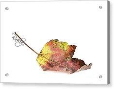 Maple Leaf Acrylic Print by Rahat Iram