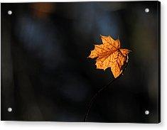Maple Leaf Setauket New York Acrylic Print