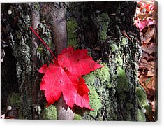 Maple Leaf Still Life Acrylic Print by Charles Warren