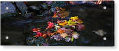 Maple Leaves-0001 Acrylic Print by Sean Shaw