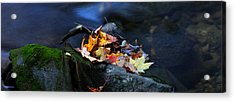 Maple Leaves-0004 Acrylic Print by Sean Shaw