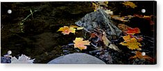 Maple Leaves-0006 Acrylic Print by Sean Shaw