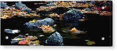 Maple Leaves-0008 Acrylic Print by Sean Shaw
